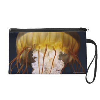 Chrysaora fuscescens,  Pacific Sea nettle Wristlet Purse