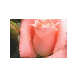 Chrysler Rose Bud Wall Art Stretched Canvas Prints