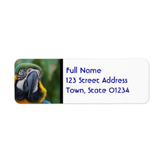 Chubby Cheeked Blue and Gold Macaw Return Address Label