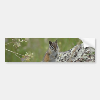 chubby cute chipmunk on rock bumper stickers