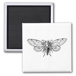 Cicada Fridge Magnets