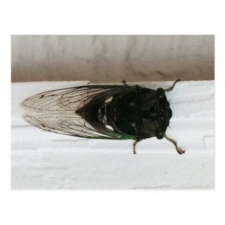 Cicada Photo Postcard