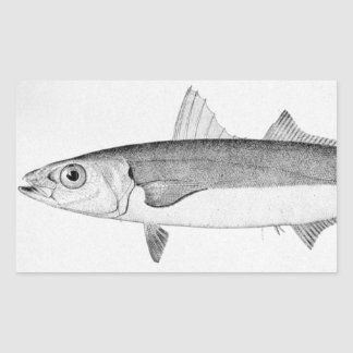 Cigar Fish Rectangular Sticker