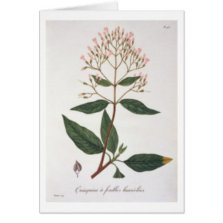 Cinchona from 'Phytographie Medicale' by Joseph Ro Card