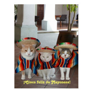 Cinco de Mayo Gatos Postcard