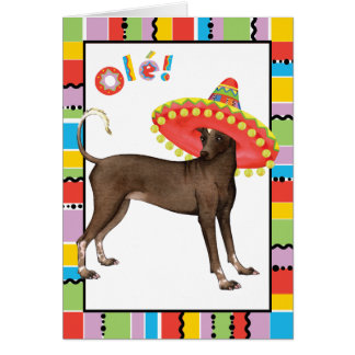 Cinco de Mayo Xolo Card