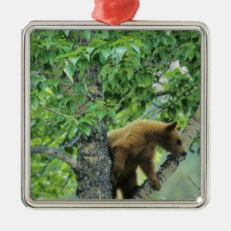 Cinnamon colored black bear in aspen tree in christmas ornament
