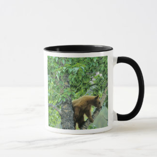 Cinnamon colored black bear in aspen tree in mug