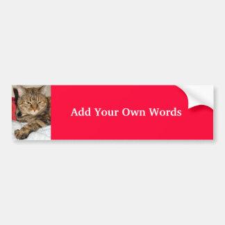 Cinnamon the Cat Bumper Sticker
