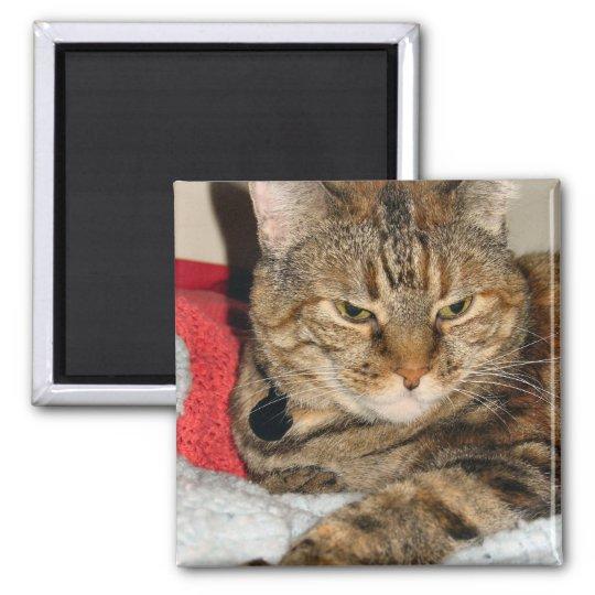 Cinnamon the Cat Square Magnet