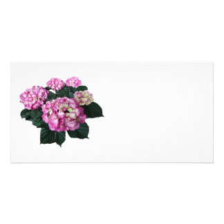 Circle of Pink Hydrangea Photo Card