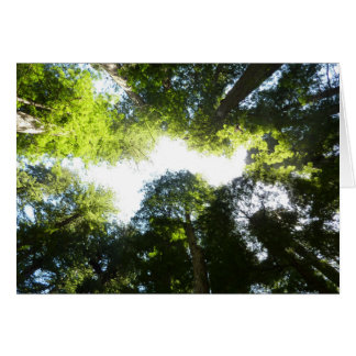 Circle of Redwood Trees at Redwood National Park Greeting Card