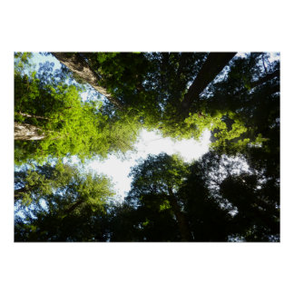 Circle of Redwood Trees at Redwood National Park Poster