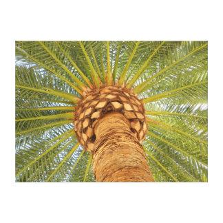 Circle Palm Canvas Print