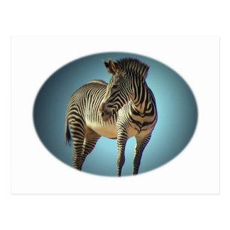 Circular Zebra Postcard
