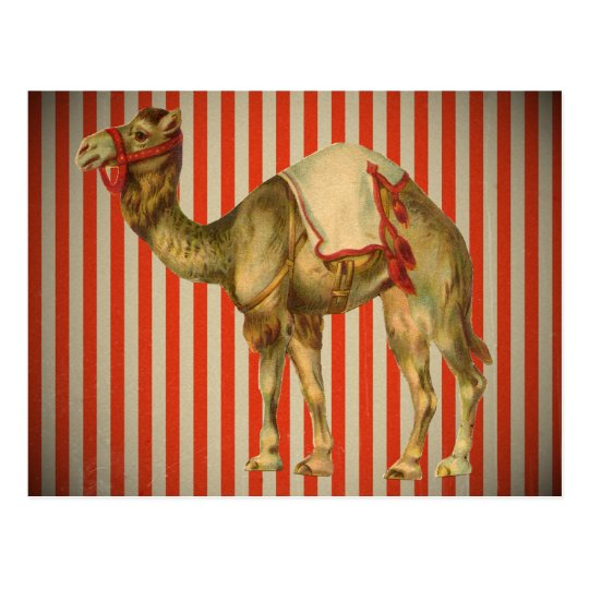 CIRCUS CAMEL VINTAGE POSTCARD