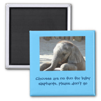 Circuses are no fun for baby elephants magnet