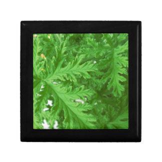 Citronella Plant Texture Small Square Gift Box