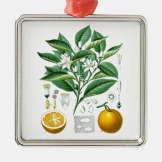 Citrus Fruit Botanical Illustration no.1 gift Christmas Ornament