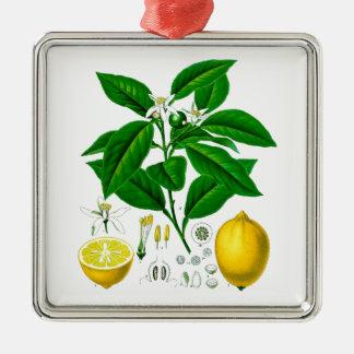Citrus Fruit Lemon Botanical Print no. 7 Art Silver-Colored Square Decoration