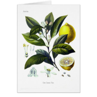 Citrus limonum (Lemon) Greeting Card