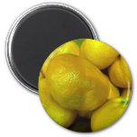 Citrus Squash Refrigerator Magnet