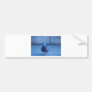 City Pigeon Bumper Sticker