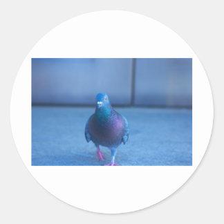 City Pigeon Round Stickers