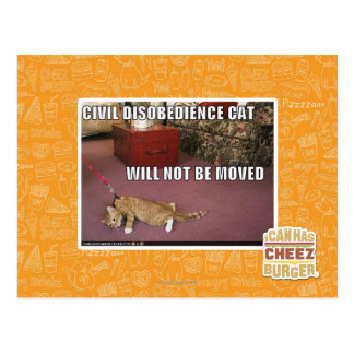 Civil Disobedience Cat Postcard