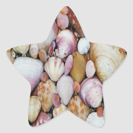 Clam Shell Star Sticker