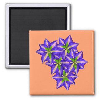 Clamatis 6 square magnet