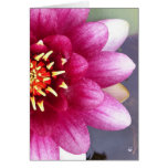 Claret Coloured Water Lily Greeting Card