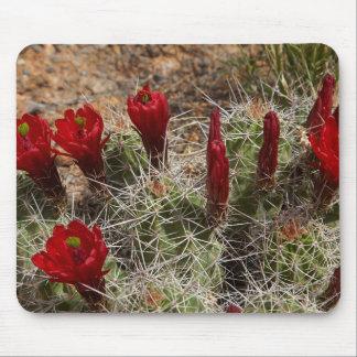 Claret Cup cactus flowers 2 Mouse Pad