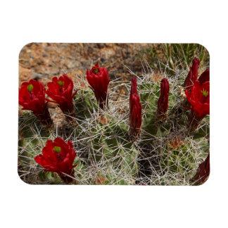 Claret Cup cactus flowers 2 Rectangular Photo Magnet