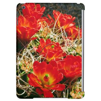 Claret Cup Cactus Wildflowers