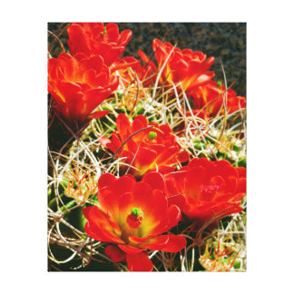 Claret Cup Cactus Wildflowers Canvas Print