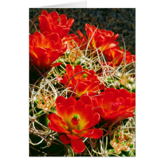 Claret Cup Cactus Wildflowers Card