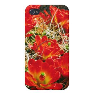 Claret Cup Cactus Wildflowers iPhone 4 Case