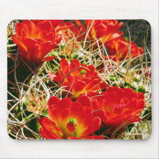 Claret Cup Cactus Wildflowers Mouse Mat