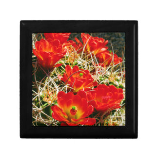 Claret Cup Cactus Wildflowers Small Square Gift Box