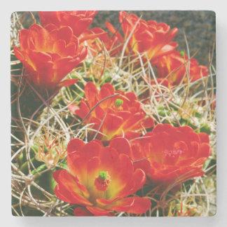 Claret Cup Cactus Wildflowers Stone Coaster
