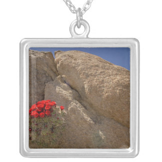Claret cup or Mojave mound cactus in bloom Square Pendant Necklace