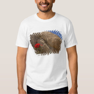 Claret cup or Mojave mound cactus in bloom T Shirts
