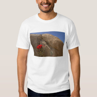 Claret cup or Mojave mound cactus in bloom T-shirts
