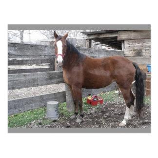 Clarien's Horse Postcard