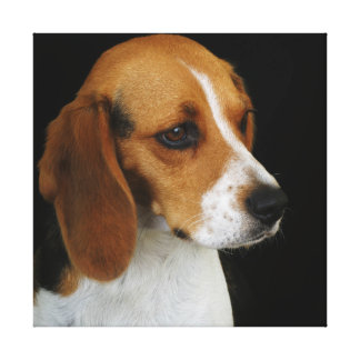 Classic Beagle Stretched Canvas Print