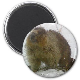 Classic Beavers Magnet