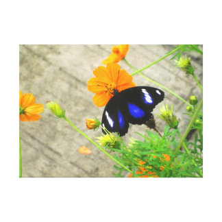 Classic Blue and Black Butterfly Wrapped Canvas Stretched Canvas Prints