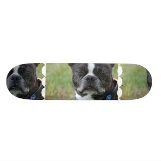 Classic Boston Terrier Dog Skate Board