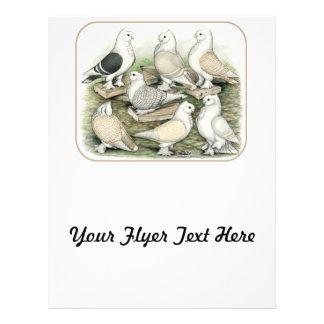 Classic Frill Pigeons Satinettes 21.5 Cm X 28 Cm Flyer
